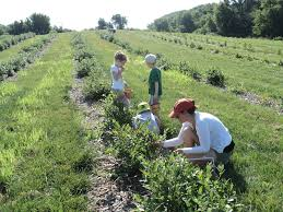 While at the vacation rental on Lake Superior, you can enjoy blueberry picking